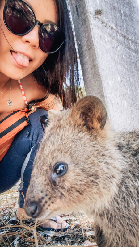 Rottnest Island quokka | Overland Lady by Monique Song